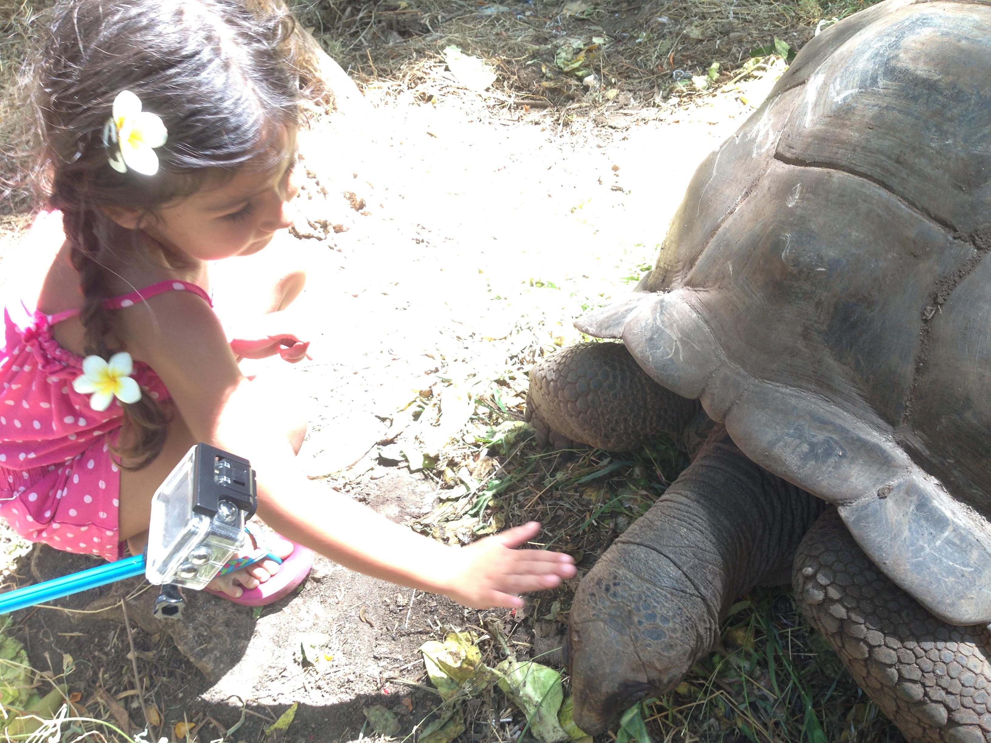 Escursione a Nakupenda, Zanzibar: tartarughe giganti e Prison Island